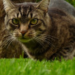 A nice cat in the garden — Lizenzfreies Foto