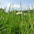 A sunny green meadow with nice flowers — Stockfoto