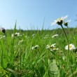 Stock Photo: Sunny green meadow with nice flowers