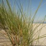 North sea beach on the island ameland in holland — Stock Photo #9659454