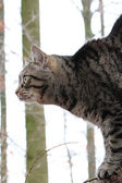 A nice cat in the forest — Stock Photo