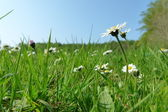Un prado verde soleado con bonitas flores — Foto de Stock