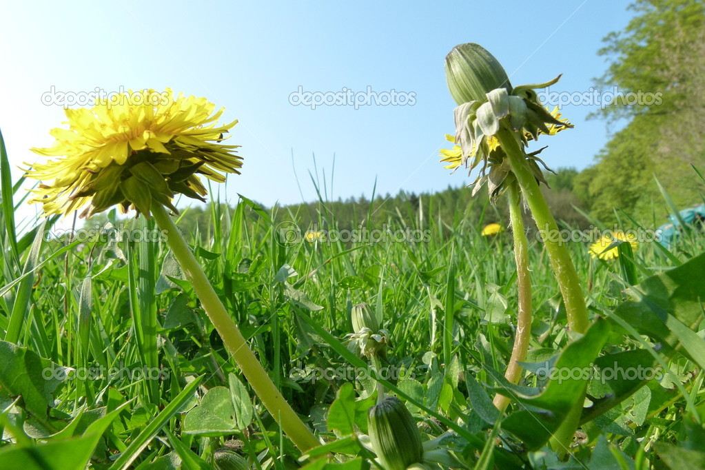 A sunny green meadow with nice flowers — Stock Photo #9657472