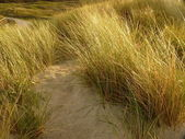 North sea dunes in the sunset on the island ameland in holland — Stock Photo