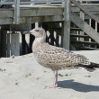 Nice seagull at the beach — Stockfoto