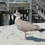 bel gabbiano sulla spiaggia — Foto Stock