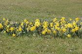 Linda flor amarilla — Foto de Stock