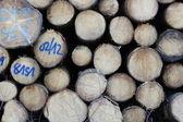 ドイツの森林の薪 — ストック写真