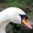 White swan — Stock Photo #9926643