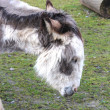A sweet donkey — Stock Photo #9964889