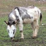 A sweet donkey — Stock Photo #9965157