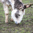A sweet donkey — Stock Photo #9965243
