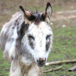 A sweet donkey — Stock Photo #9965420