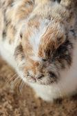 Bir tavşan — Stok fotoğraf