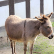 A sweet donkey — Stock Photo