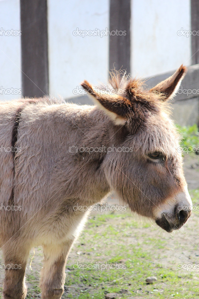 A sweet donkey — Stock Photo #9977083