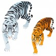 Stock Vector: Tigers.