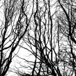 Bare wintry trees — Stock Photo