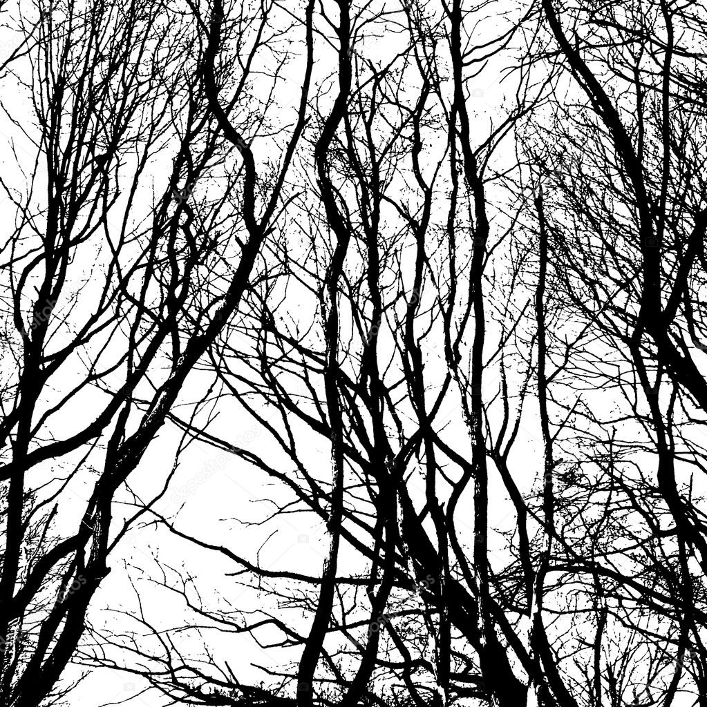 Bare wintry trees in black and white — Stock Photo #9673020