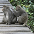Stock Photo: Interaction of two monkeys