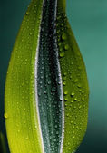 Beautiful drops of dew on a green leaf — Stock Photo