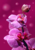 Orchid Flower border design — Stock Photo