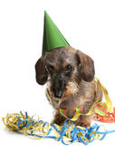 Dog with party hat and party streamers — Stock Photo