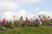 Border of different spring flowers and grass — Stock Photo