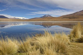 Landscape with flamingos in South Bolivia — Stock Photo