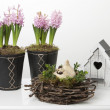 Spring decoration with hyacinths, birdhouse and chicken — Stock Photo