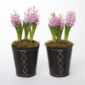 Two flowerpots with hyacinths — Stock Photo