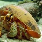 ������, ������: Crab oceanarium Thailand 2011