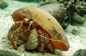 Crab, oceanarium, Thailand 2011 — Stock Photo