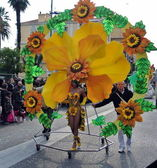 Menton: flower — Stock Photo