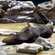 Otter in a zoo — Stock Photo #9852910