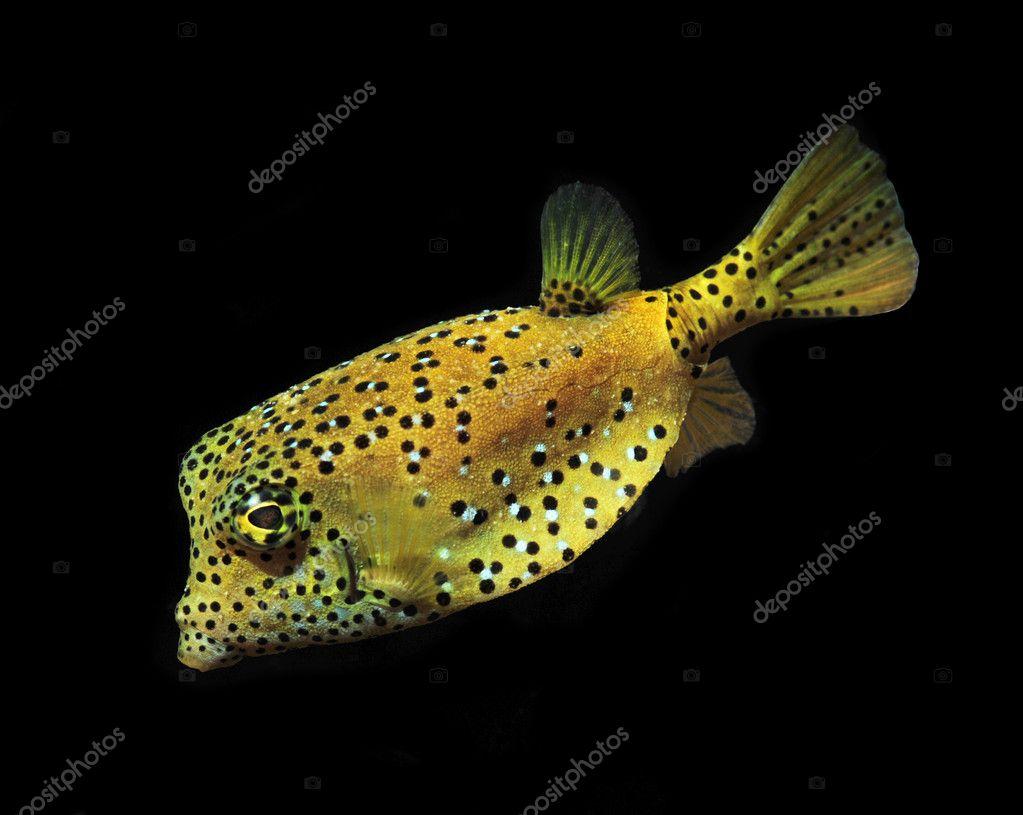 Marine Tropical Fish Marine Fish Tropical Reef
