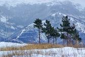 Whinter. Snow. Gelendzhik — Stock Photo
