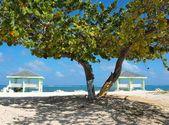Caribbean Cayman Islands Beach — Stock Photo