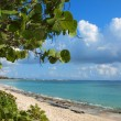 Caribbean Beach Grand Cayman — Stock Photo