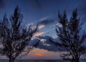 Casuarina Trees At Dusk - Grand Cayman — Stock Photo