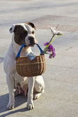 Dog with basket — Stock Photo