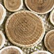 Beautiful wooden circles on a fabric — Stock Photo