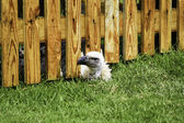 Bird peeking under wooden fence — Stock Photo