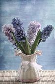 Bouquet violet hyacinth — Stock Photo