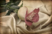 Beautiful Rose.Vintage — Stock Photo