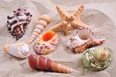 Starfish and seashells — Stock Photo