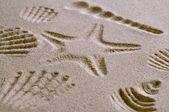 Seashell Pattern — Stock Photo