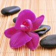 Stock Photo: River rocks with orchid