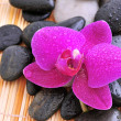 River rocks with orchid — Stock Photo