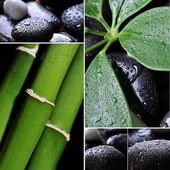 Collage of wet river rocks with green leaf — Stock Photo